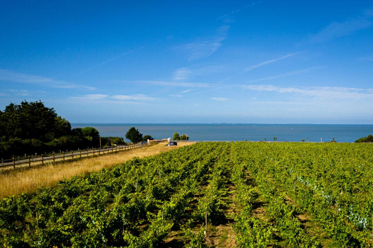 Domain viticole drone 2 - Éco-Domaine La Fontaine