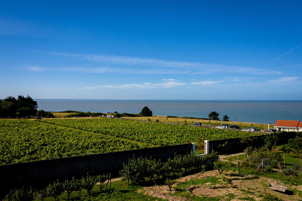 Domain viticole drone - Éco-Domaine La Fontaine